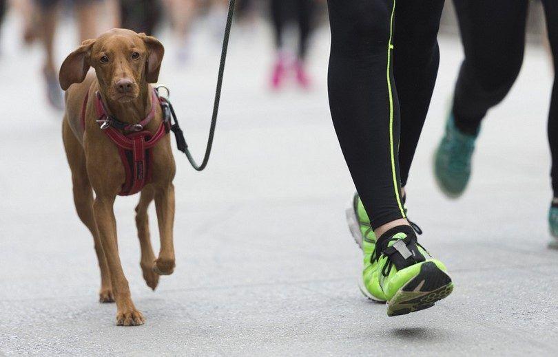 Combien d`exercice fait mon besoin de chien: les choses à considérer lors de la préparation de la routine de jeu