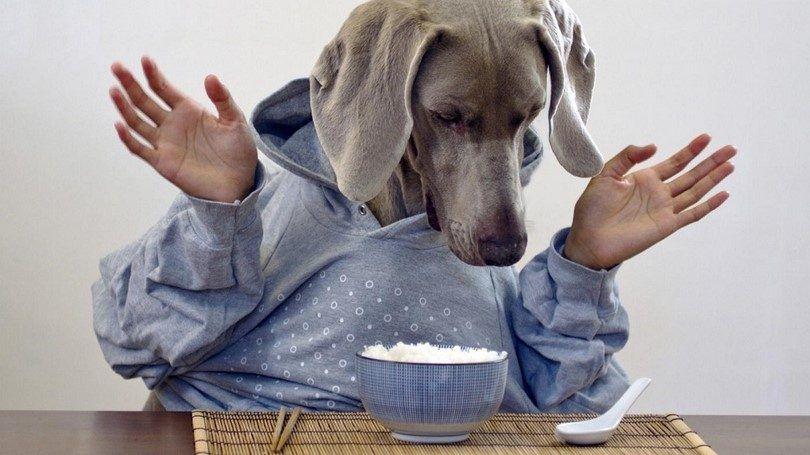 Combien de nourrir votre chien