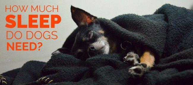 combien de sommeil ne les chiens ont besoin