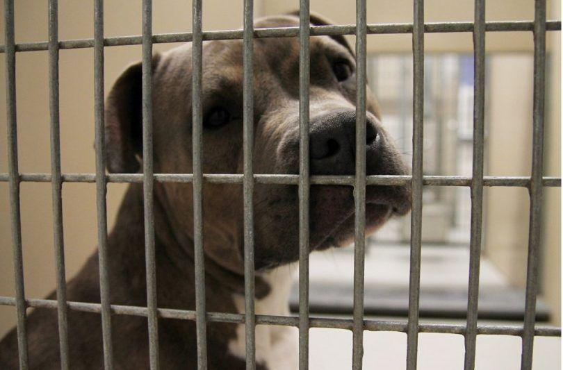 Sad dog waithing pour adoption