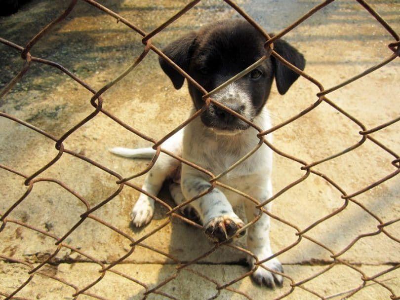 Exécution des refuges pour chiens