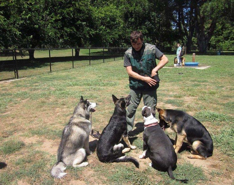 Comment devenir un dresseur de chiens: institutions, activités et certifications
