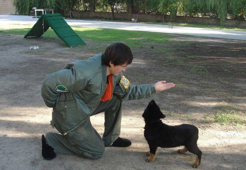formation de chien lessions privé