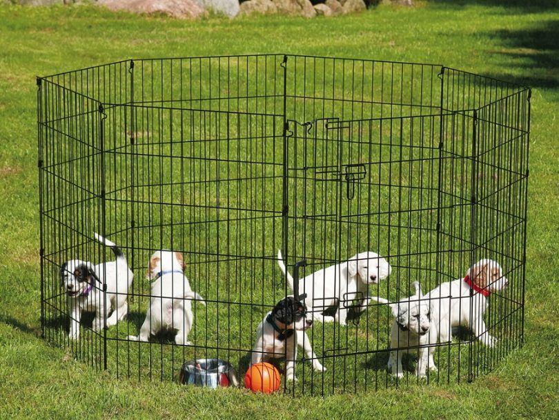 Comment construire un enclos de chien: un guide étape par étape pour les débutants