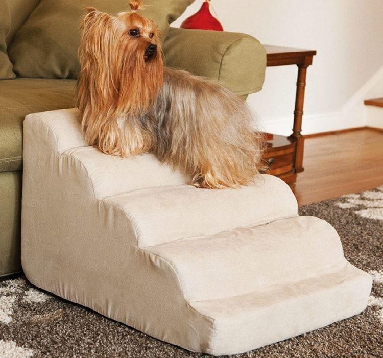 Faire des escaliers pour votre chien