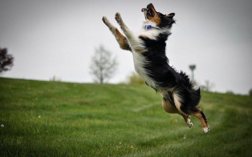 Comment calmer un chien: des solutions naturelles et astuces efficaces