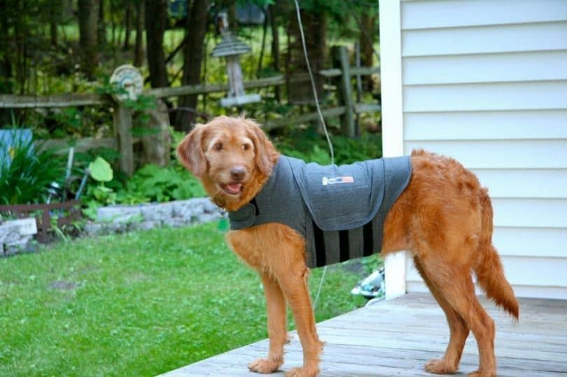 Veste Thundershirt chien Anxiété