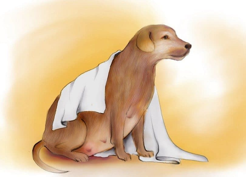 Préparer une crèche pour chien enceinte