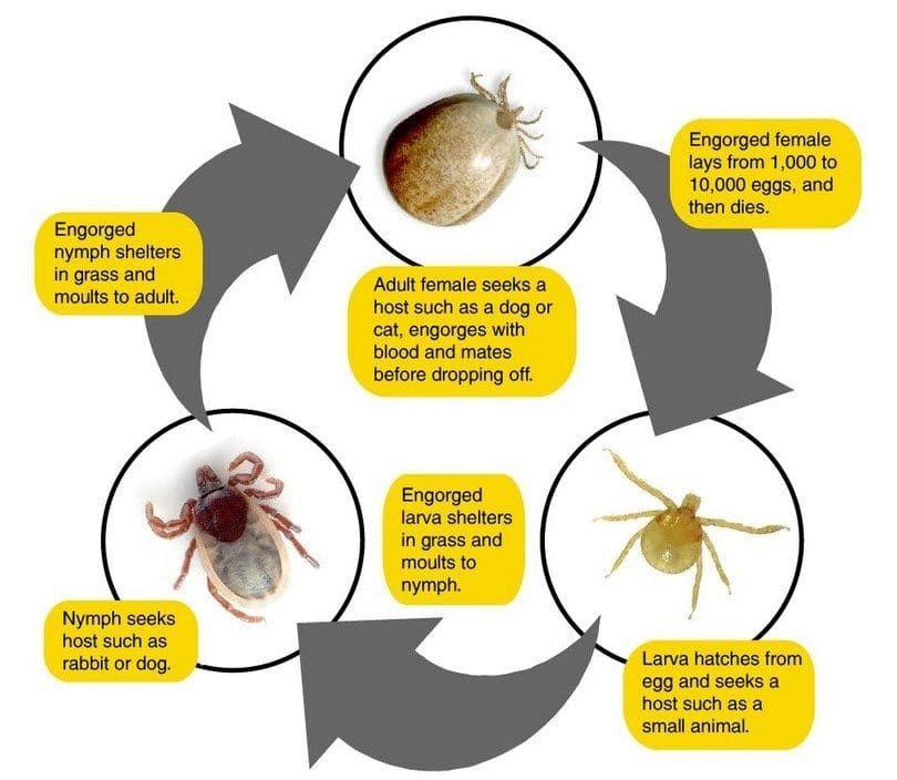 Méfiez-vous des parasites
