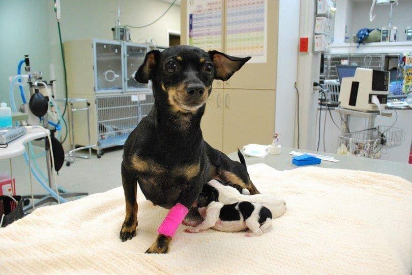 vous contacter vétérinaire