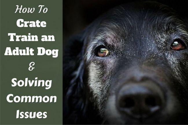 Comment former caisse, un vieux chien adulte - le vôtre ou adopté