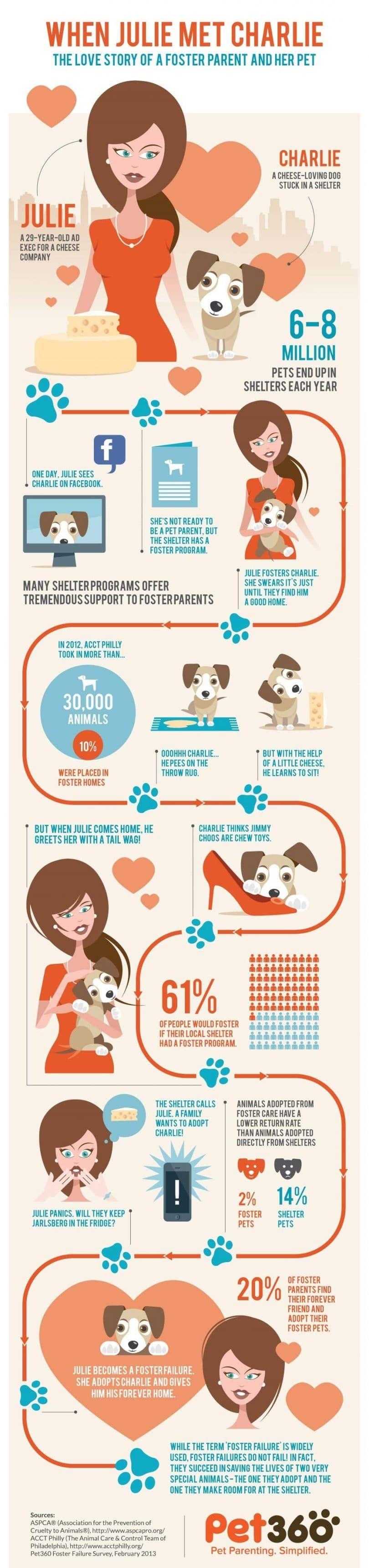 Infographic parent nourricier et le chien