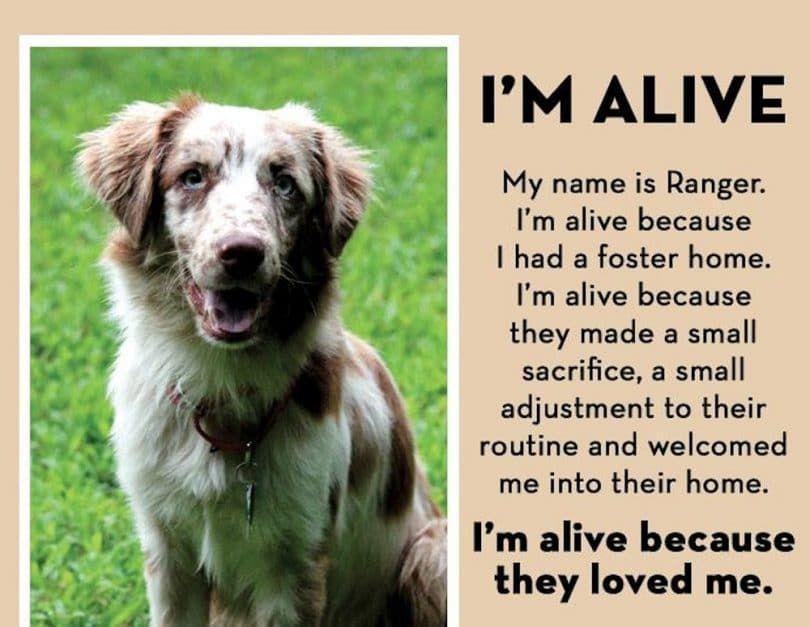 Je suis chien vivant