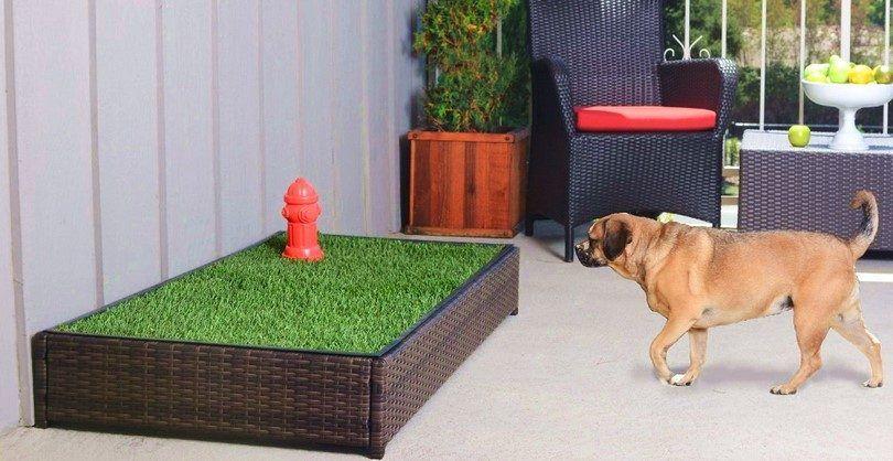 Comment la maison de former un chien: les techniques à appliquer pour les chiots et les adultes