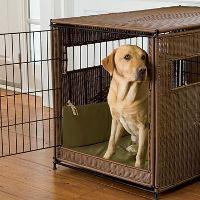 Un chiot Labrador dans une caisse élégante