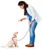 Une femme formation d`un Labrador