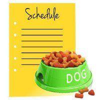 écuelle pour chien vert de la nourriture à côté d`un calendrier vierge jaune