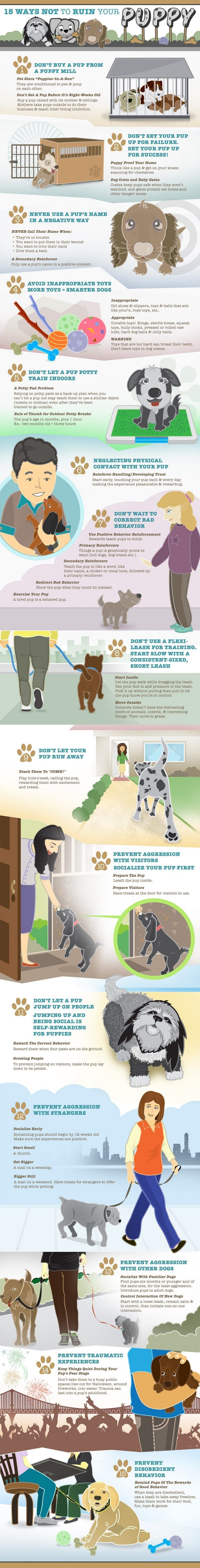 formation Puppy infographique