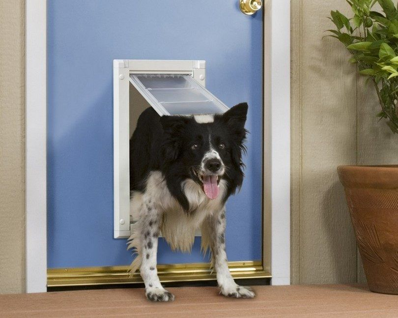 Comment installer une porte pour chien: instructions et idées de bricolage