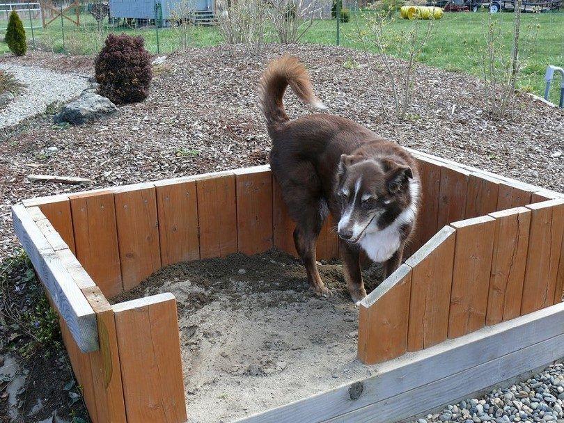 Chien fosse avec clôture
