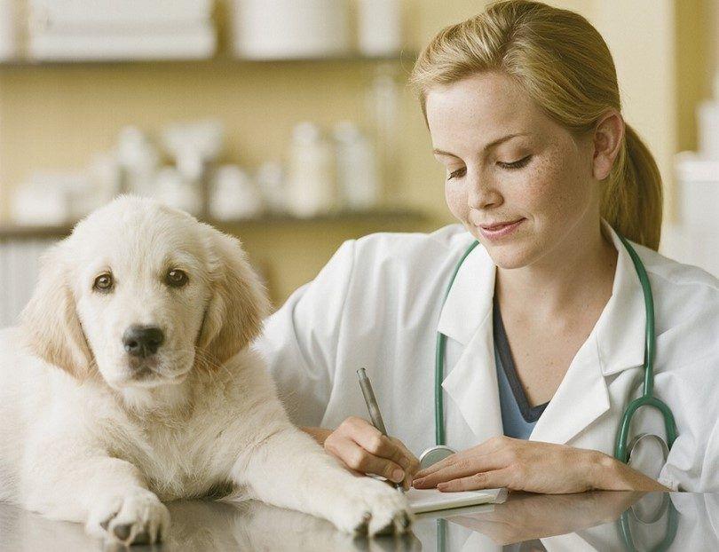 Comment garder votre chien en bonne santé: 8 facteurs importants