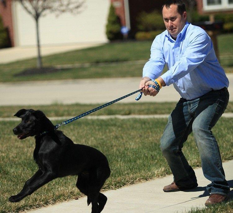 Comment former un chien en laisse: apprendre à conduire