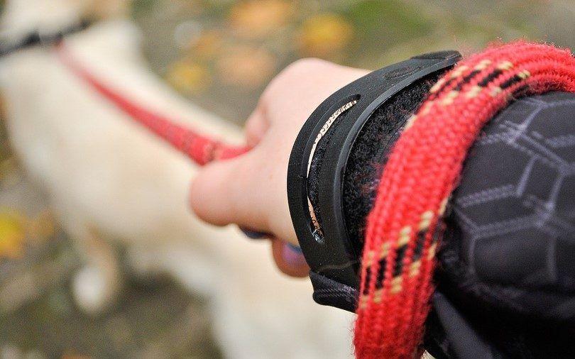 Tenir chien`s leash
