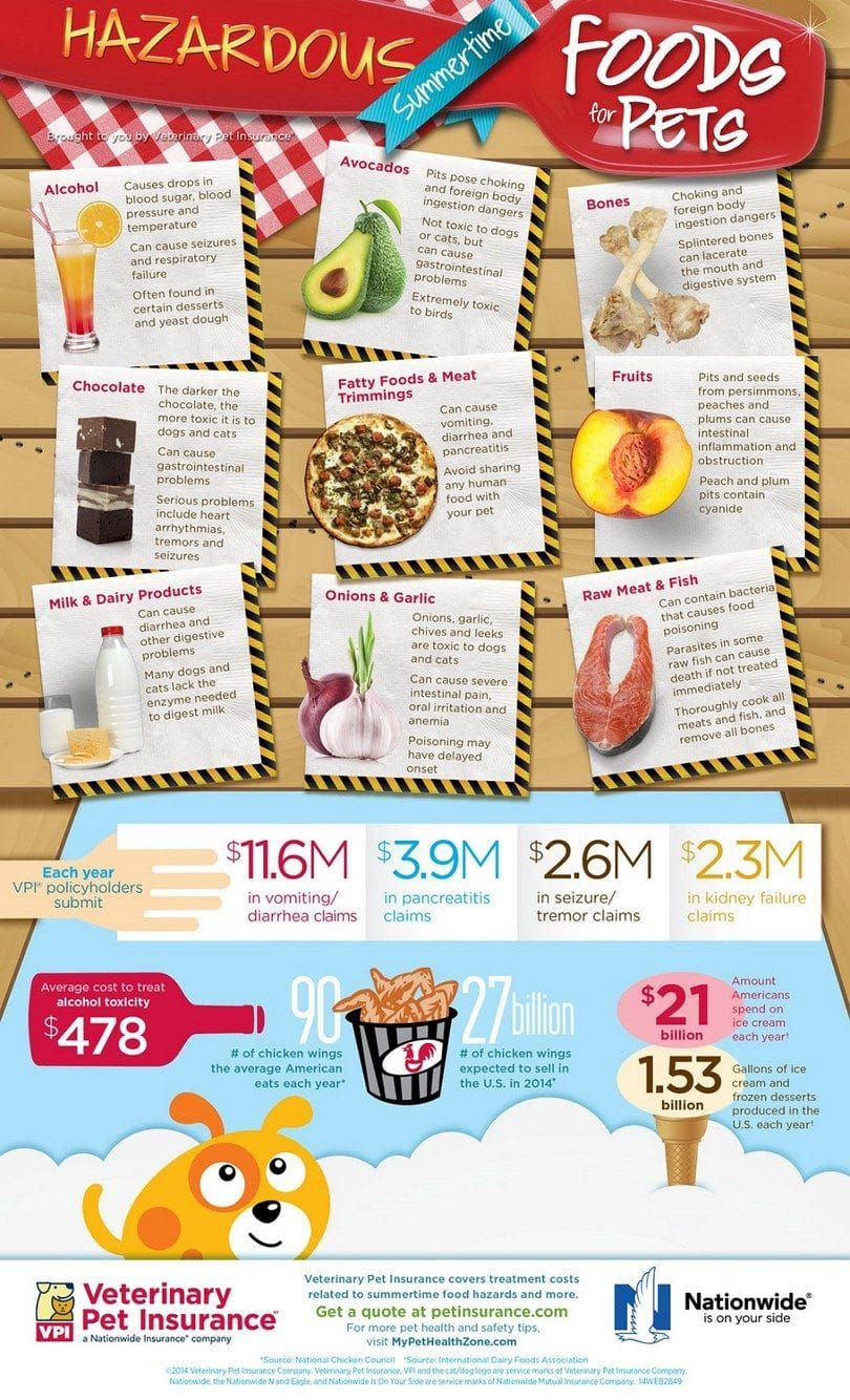 aliments toxiques pour les chiens infographiques