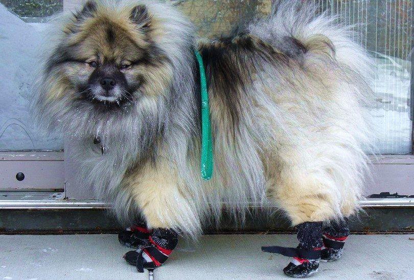 Comment faire butins de chien: un projet de bricolage amusant pour les pattes de buster