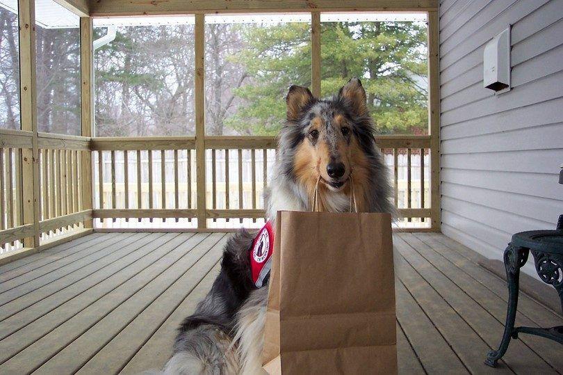 chien de service aide