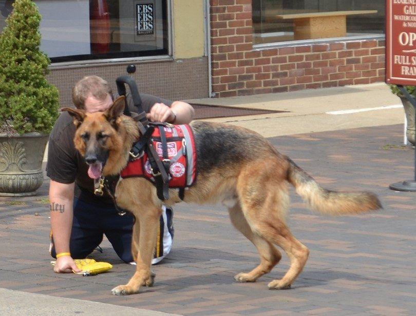 chien Formé aide