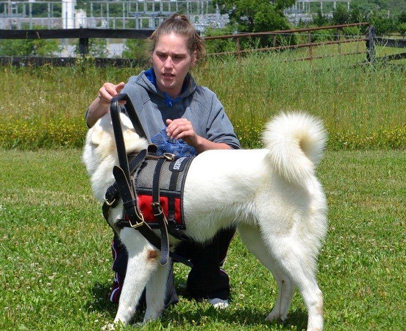 Formation pour être un chien de service