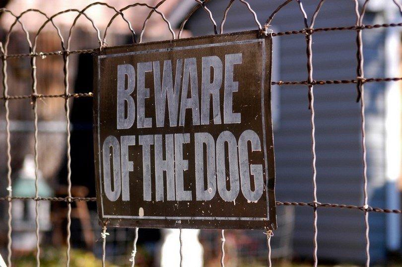 Comment surmonter la peur des chiens: cynophobia chez les adultes et les enfants