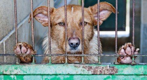 animal information sur la violence