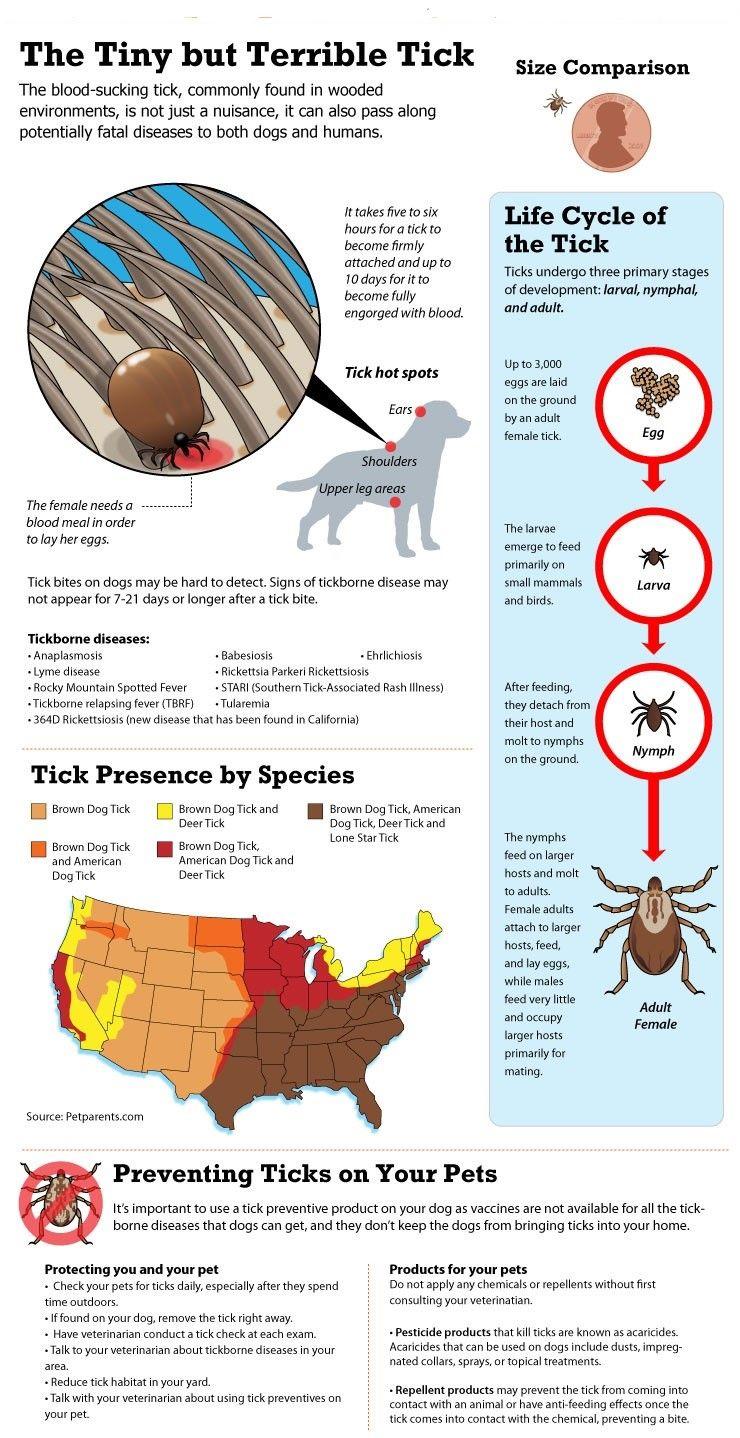 Minuscule, mais terrible tick infographique