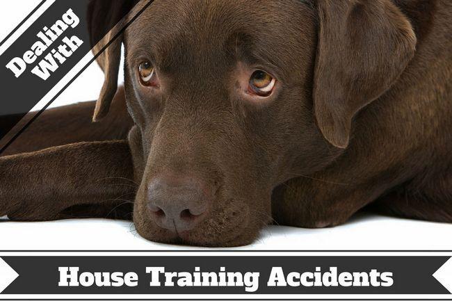 Comment enlever les taches d`animaux et les odeurs - accidents ne se produisent