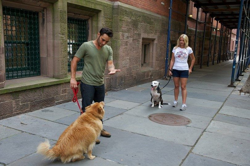 Comment socialiser un chien: le meilleur ami de l`homme aidant faire des amis