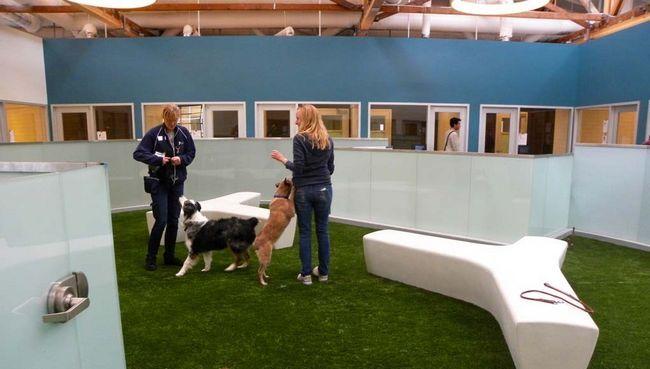 Comment faire pour démarrer un parc de chien d`intérieur