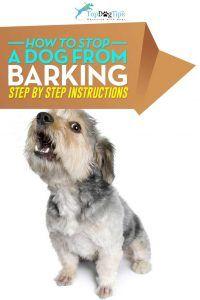 Comment arrêter un chien d`aboyer vidéo
