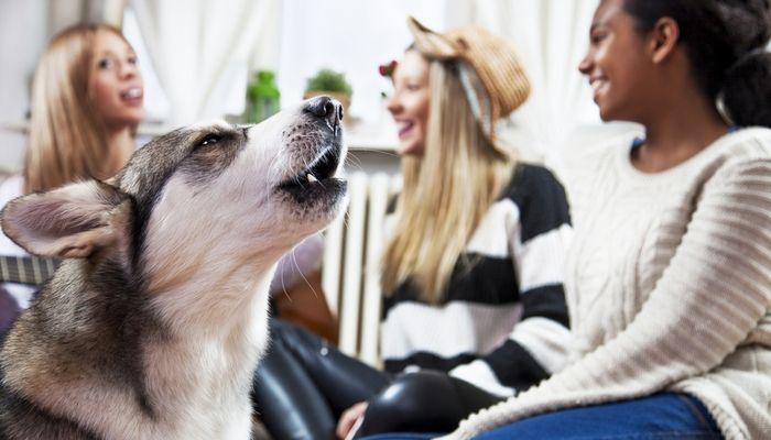 Comment arrêter un chien d`aboyer