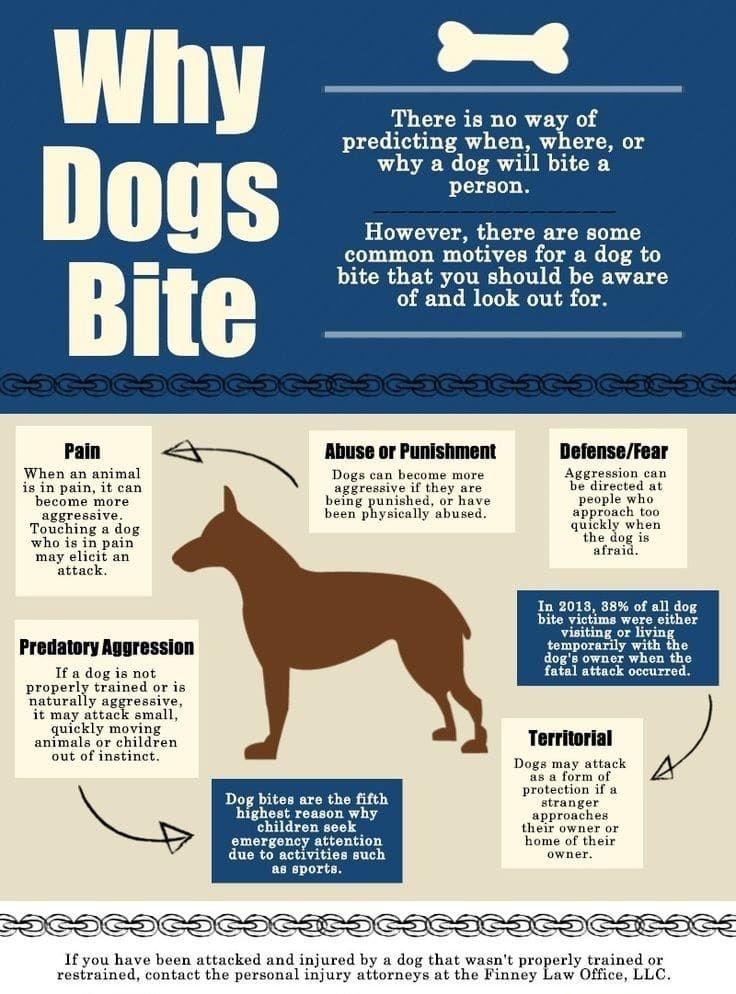 Pourquoi les chiens mordent