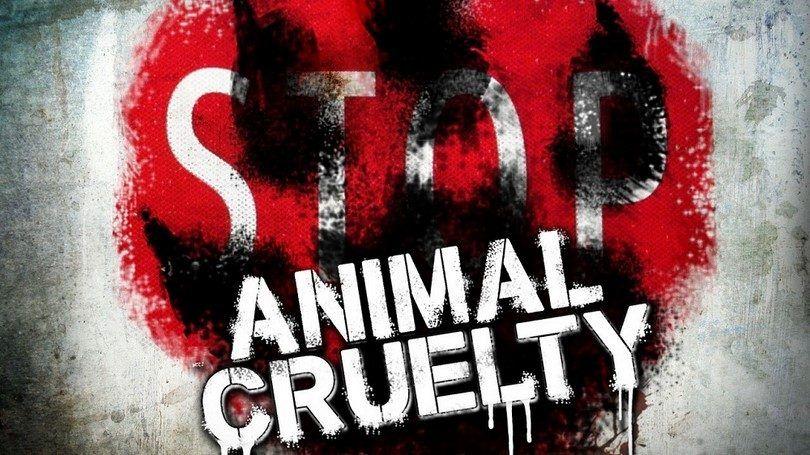 Arrêtez l`abus des animaux