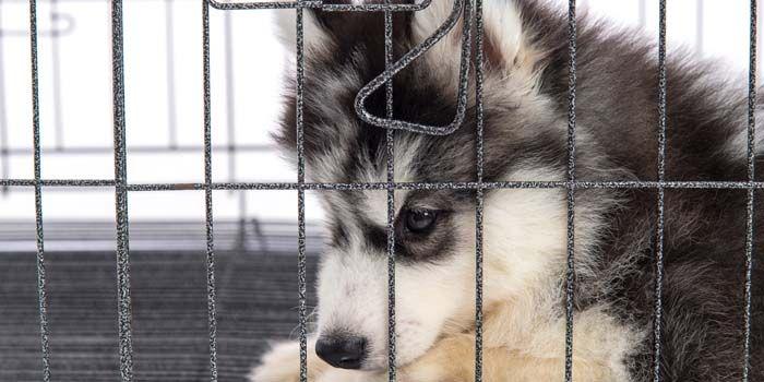 Comment arrêter chien de Pooping en Chambre et en Crate Dog