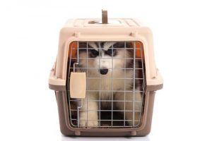 la taille correcte d`une caisse de chien ou un chien de la maison