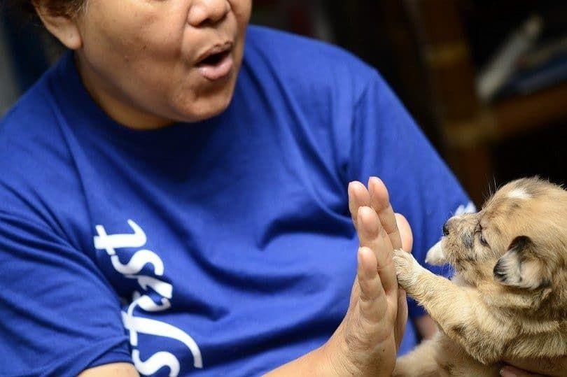Apprenez à votre chien à faire un high five