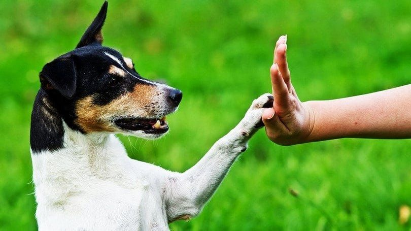 High five avec un chien