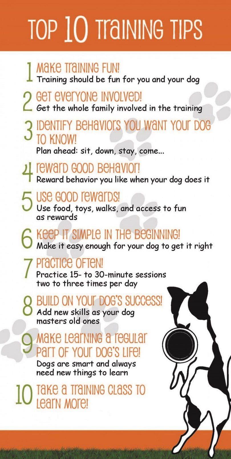 Dix conseils sur la formation de chien