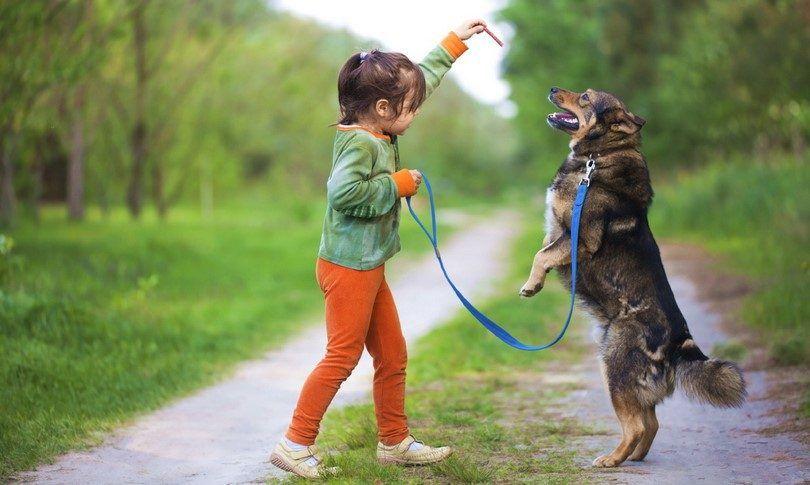 Comment apprendre à un chien à rester, assis ou venir quand on lui demande: bases de formation d`obéissance de chien