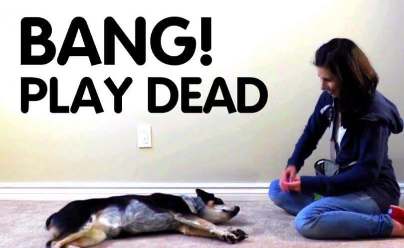 Apprenez à votre chien à Play Dead