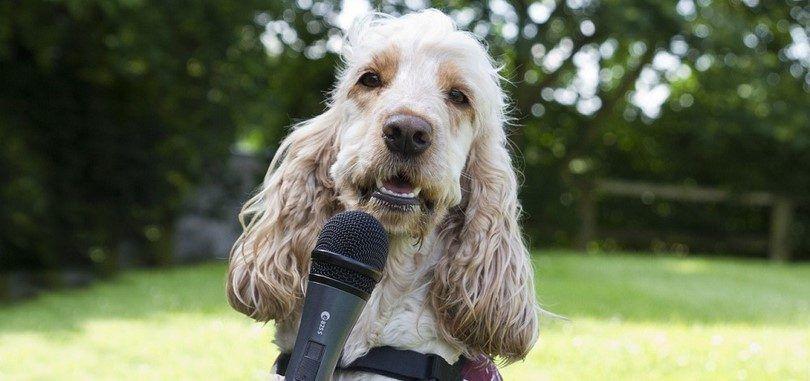 Comment former un chien sourd: conseils et techniques importantes